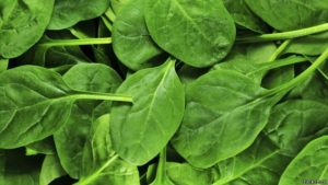 141024134827_spinach_624x351_thinkstock
